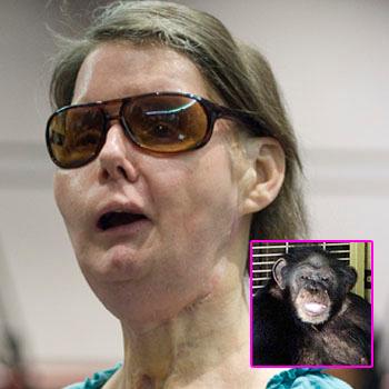 //face_eating_chimp