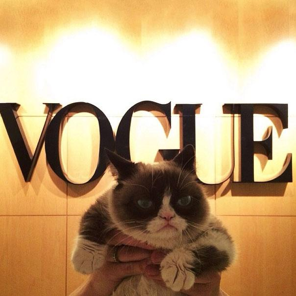 Grumpy Cat Vogue