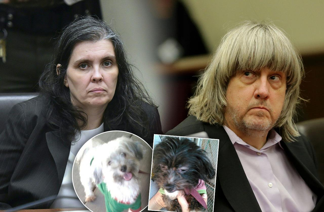 Turpin Family Dogs Perfect Condition