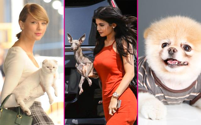 //richest celebrity pets pp