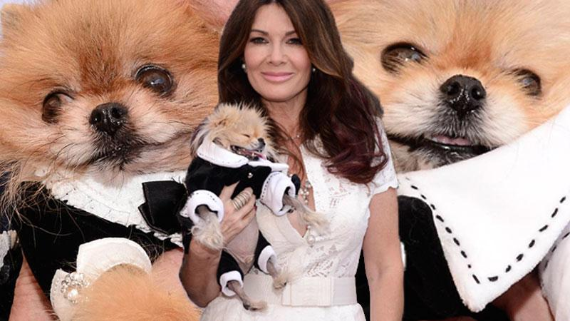 Lisa Vanderpump Pets Luncheon