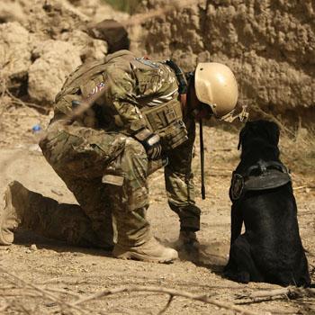 //dogs ptsd suffer war getty