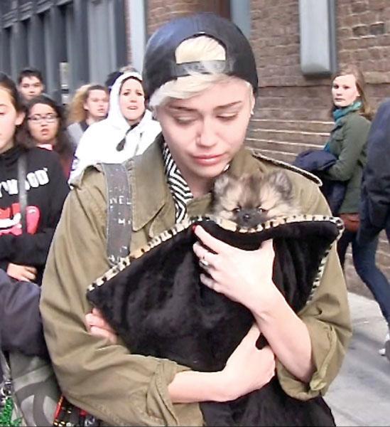 Miley Cyrus Crying Puppy Moonie
