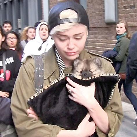//miley cyrus crying puppy moonie