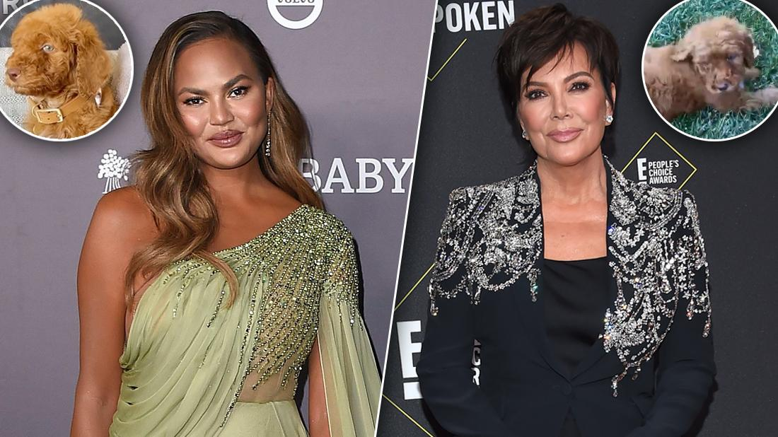 Fans Slam Pet Rescue After Chrissy Teigen & Kris Jenner Adopt Puppies