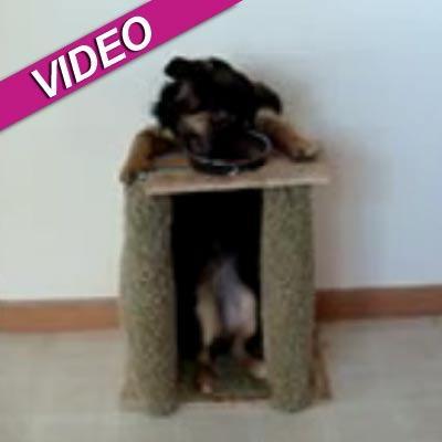 //bella dog eating standing up