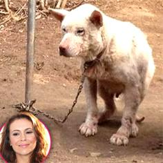 //alyssa milano saved south korea dog rescued sq