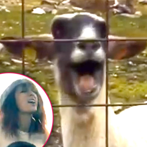 //taylor swift parody goat
