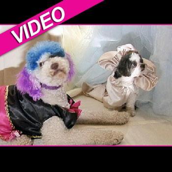 //dog wedding nbc