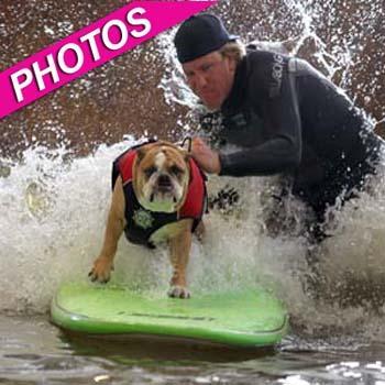 //surfing pups casting call splash