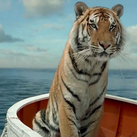 //tiger_life_of_pi