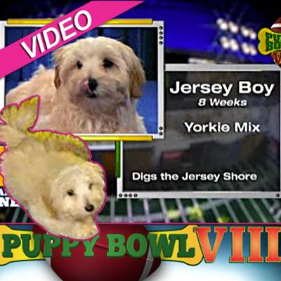 //puppy bowl post