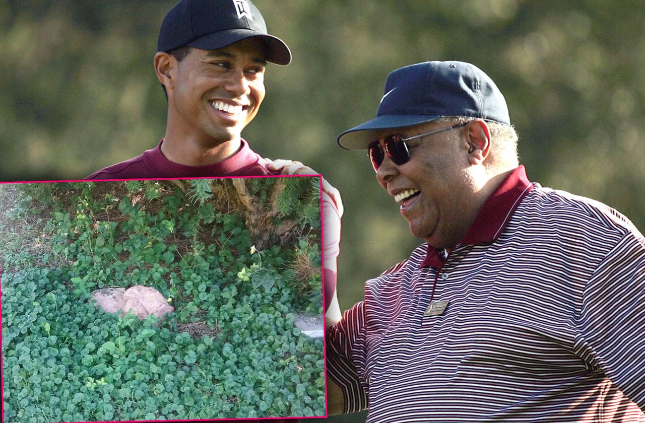 //Tiger Woods Dad Grave Abandoned Overgrown Weeds pp