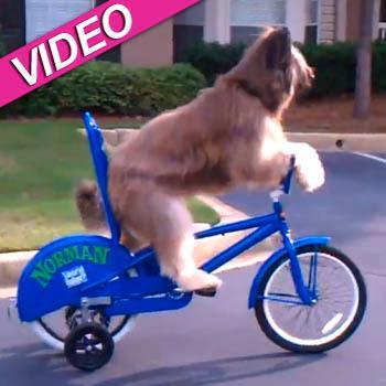 //norman dog bike youtube