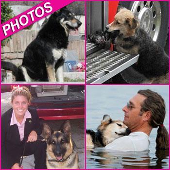//amazing dogs