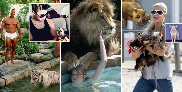 //bizarre celebrity pets wide rextwittergettypcn