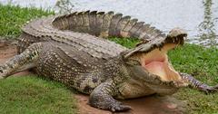 //Disney Alligator Attack Wildlife Conservation Records Alligator Disasters