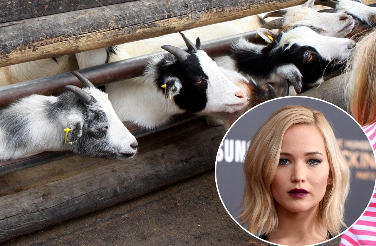 //jennifer lawrence wants to quit acting for goat farming pp