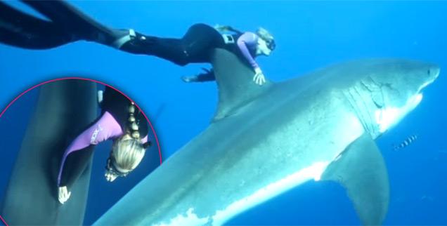 //shark whisperer wide abcnews com