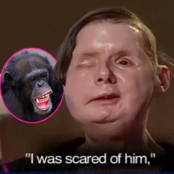 //charla nash chimp lawsuit