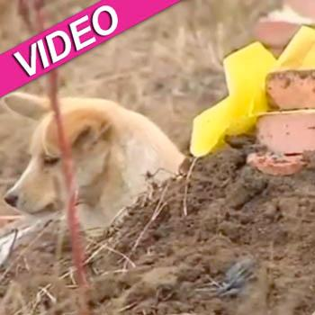 //chinese dog master grave video