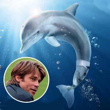 //dolphin tale poster