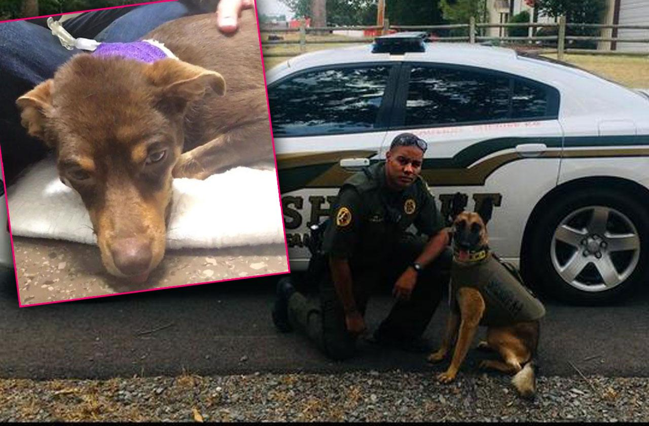 Arkansas Deputy Fired Shot Dog Caught Video