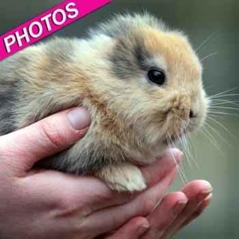 //earless bunny dead germany