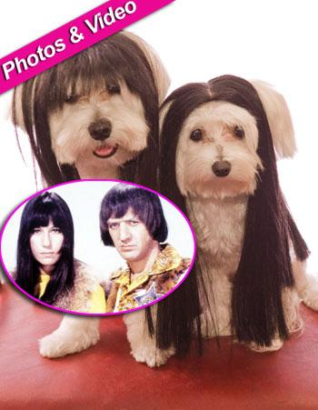 //dog wigs sonny cher zuma getty
