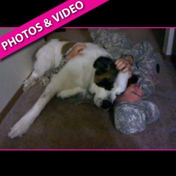 //soldier dog st bernard youtube