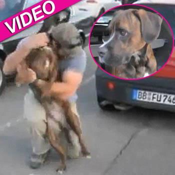 //happy dog return owner video