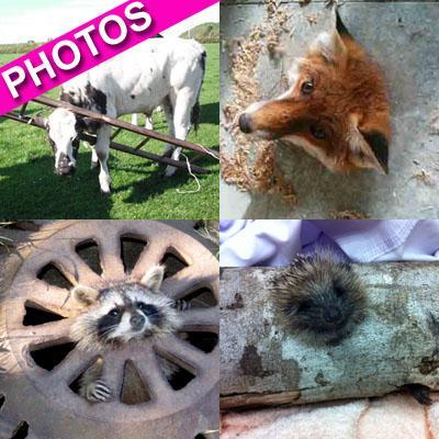 //animals stuck