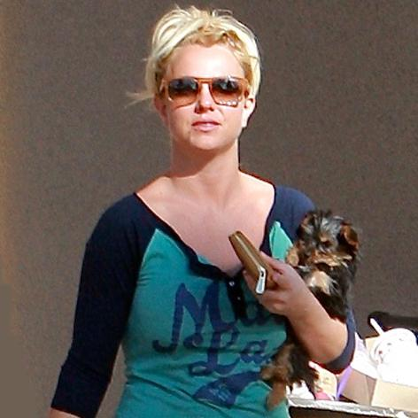 //britney spears dog square