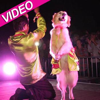 //dancing dog bonnaroo