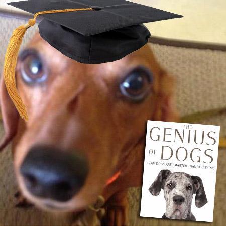 //genius dogs nc
