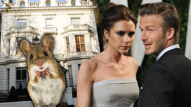 david beckham victoria london mansion renovations neighbors mice
