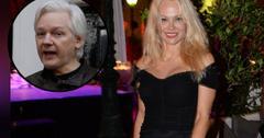//pamela anderson strikes pose as pal julian assange could get pardon pp