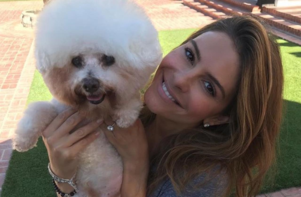 maria menounos dead dog horror pet euthanized actress bed