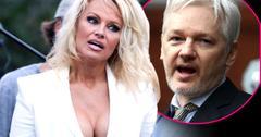 //pamela anderson dating julian assange faking orgasms pp