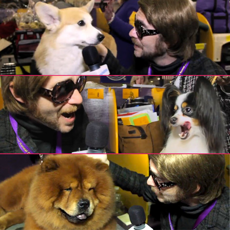 //randall dog show pawnnation com