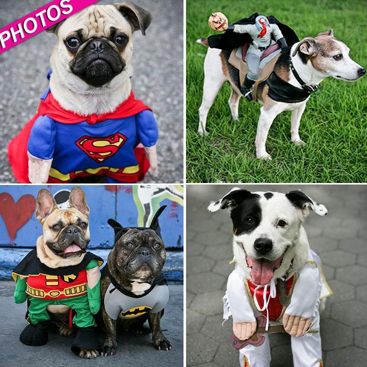 //halloween dogs wwwjohnchapplecom