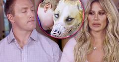 Kim Zolciak Son Sees Dog That Mauled Him