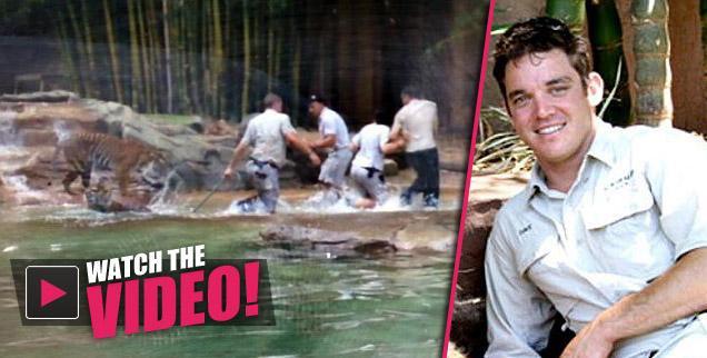//tiger attack australia zoo