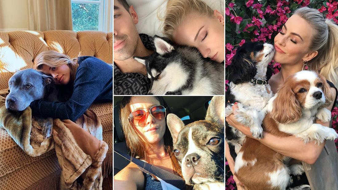Celebrity Pet Deaths Of 2019