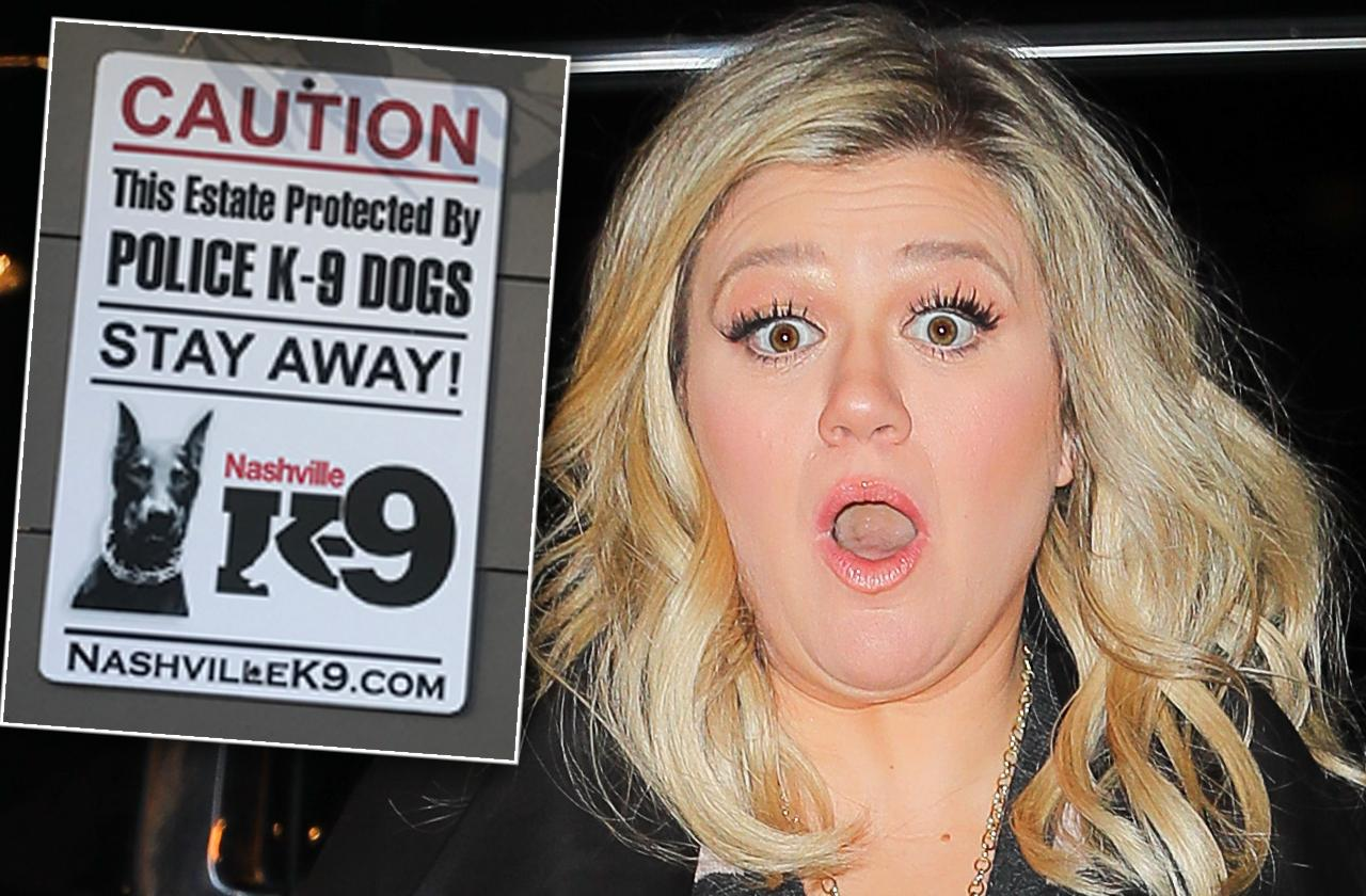 Kelly Clarkson Gets Trained Security Dog After Home Break-In