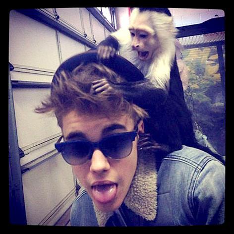 //bieber monkey