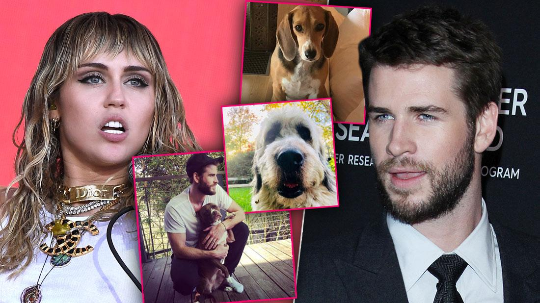 Miley Cyrus & Liam Hemsworth To Fight Over Animals After Shocking Split